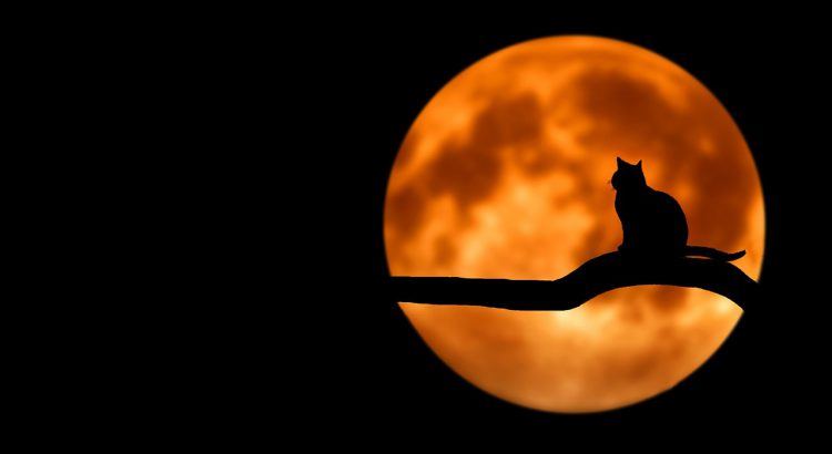 black cat silhouette with orange full moon backdrop